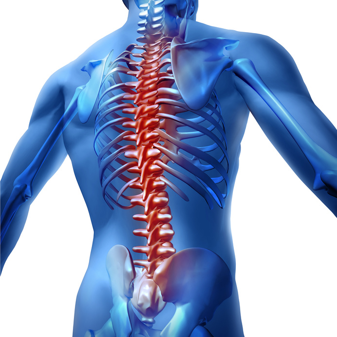 Human body backache and back pain with an upper torso body skeleton showing the spine and vertebral column in red highlight as a medical health care concept for spinal surgery and therapy on white background.